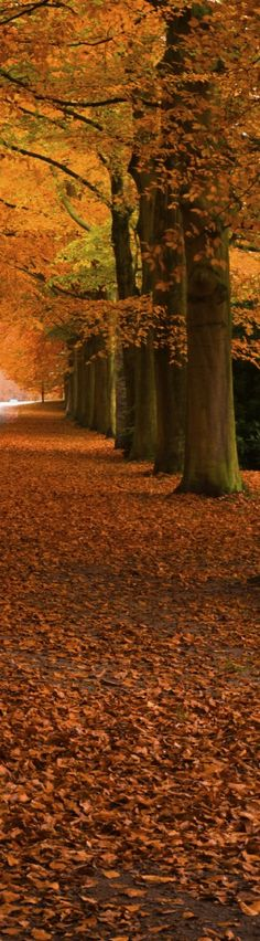 nature love - Autumn Trees