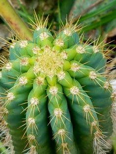 Background - Cactus
