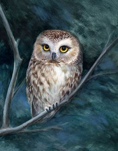 """sawwhet owl"" by Lisa McLaughlin: Buy prints, posters, canvas and framed wall. Owl Bird, Bird Art, Pet Birds, Owl Photos, Owl Pictures, Dibujos Toy Story, Saw Whet Owl, Owl Artwork, Beautiful Owl"