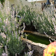 Giardino naturale-Vivai Guardini,Pescantina (Vr)Italia