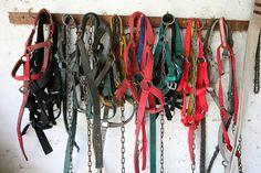 Harnesses by Alex E. Proimos, via Flickr