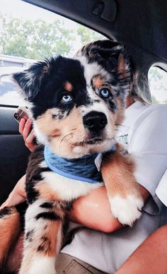 Baby Animals Pictures, Cute Animal Pictures, Dog Pictures, Animals And Pets, Dog Photos, Wild Animals, Cute Little Animals, Cute Funny Animals, Best Puppy Names