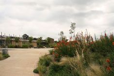 OR Tambo Environmental and Narrative Centre | Ekhuruleni South Africa | Newtown Landscape Architects