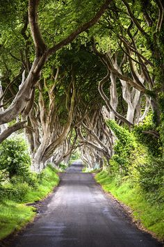 ~~Dark Hedges | Romantic, atmospheric, tunnel-like avenue of intertwined beech trees, planted in the 18th-century, Ballymoney, Ireland |  by MalachyC~~
