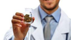 Australia mueve la ficha para legalizar la marihuana MGC Pharmaceuticals ha estado colaborando con el programa de participación de la comunidad de la Universidad de Sydney Business School en la producción de un libro blanco sobre cannabis...