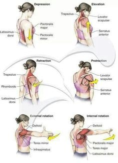 Shoulder biomechanics