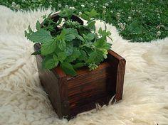 Svatava / Hrantík na bylinky