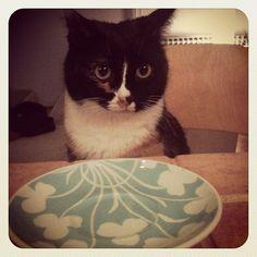 where's my dinner? #cat #cats