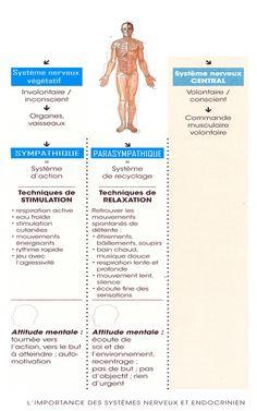 Etes-vous davantage en mode sympathique ou parasympathique ? - Bien être, santé, relaxation, massage, stress, shiatsu, Qi Qong; phytothérapie, remède de grand-mère