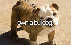 Own a bulldog