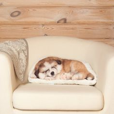 Puppy Pillow Akita Inu Dog Decor Realistic Pet by Casacova Dog Nursery, Woodland Nursery, Nursery Decor, Wall Decor, Akita Puppies, Akita Dog, Animal Cushions, Closer To Nature, Inspired Homes
