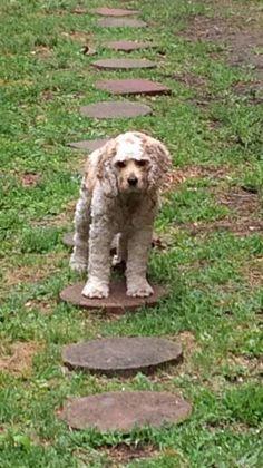 LOST DOG: 07/08/2017 - Dallas, Texas, TX, United States. Ref#: L33067 - #CritterAlert #LostPet #LostDog #MissingDog