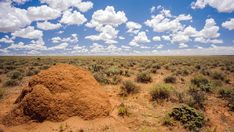 Timelapse moving upwards with an anthill in the foreground and an endless flat landscape in the background with continuos developing of cumulus clouds, rolling in and disappearing against a blue sky. Hd Video, Stock Footage, Fields, Landscapes, Country Roads, Clouds, Flat, Outdoor, Ideas
