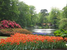 Keukenhof - Como visitar - Ducs Amsterdam