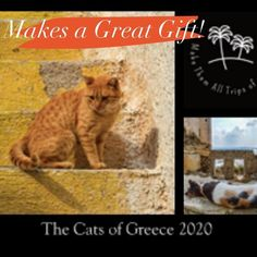 Makes a great gift! The 2020 Cats of Greece Calendar. You won't see these photos anywhere else! Wildlife Photography, Travel Photography, Calendar Ideas, Animals Photos, Santorini, Athens, Beautiful Images, Cat Lovers, Travel Destinations