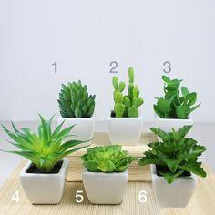 artificial cactus.aloe vera