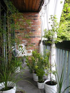 Name: Pete the Cat Location: Vancouver, BC Type of space: Balcony Tell us about your outdoor project and how you enjoy it: This is a south facing balcony on the top floor corner of a three story building. It's about 5.5m long, but only 1.25m deep (so actually very hard to get a photo of all of it at once). It has a very nice evergreen tree just at the corner which is home to finch and chickadees which I lure closer with two feeders just outside the curtains. The birds are actually my…