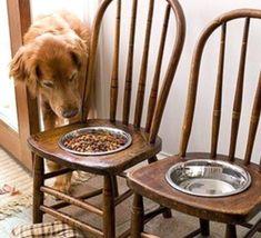 Faire une mangeoire pour grand chien