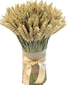 wwheat bundle | ... Wheat :: Wheat Centerpieces :: Green Beardless Wheat Cone Bundle