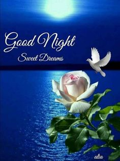 White Rose Good Night Image nights good night good night quotes sweet dreams mor… - All For Health Good Night Qoutes, Good Night Thoughts, Good Night Prayer, Good Night Friends, Good Night Blessings, Good Night Messages, Good Night Wishes, Night Quotes, Beautiful Good Night Images