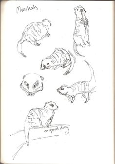 Meerkats at St. Sketchbook Drawings, Sketches, Aquarium Drawing, Observational Drawing, Charcoal Drawings, St Andrews, Animation, Map, Artwork