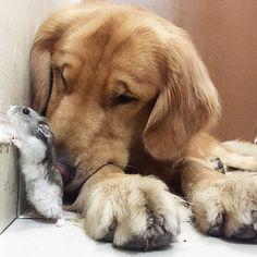 um-cachorro-oito-passarinhos-e-um-hamster-são-os-amigos-mais-incomuns-12