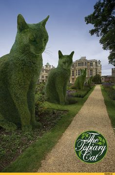 of Topiary Cats The aisle of sphinxes. Richard Saunders, The Topiary Cat series. (These are photographic images, not real topiaries!)The aisle of sphinxes. Richard Saunders, The Topiary Cat series. (These are photographic images, not real topiaries! Topiary Garden, Garden Art, Garden Design, Cat Garden, Herb Garden, Vegetable Garden, Landscape Design, Richard Saunders, Parks