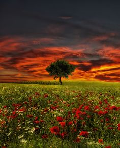 Delight by Vitor Santos on 500px