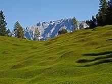 Buckelwiesen – Wikipedia