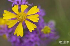 Wildflowers in Texas; © Jeff Parker / ExploreinFocus.com