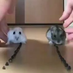 [GIF] This is called a happy family - Best Adorable Animals Funny Animal Videos, Cute Funny Animals, Cute Baby Animals, Animals And Pets, Cute Cats, Nature Animals, Animal Memes, Videos Funny, Funny Memes