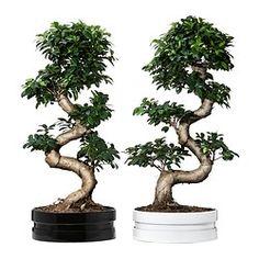 Pflanzen & Orchideen - IKEA