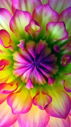 303Pixels: Bright Contrasting Petals