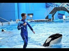 Blackfish backlash picking up steam: Trainers defend SeaWorld, point out errors