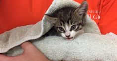 A Tiny Squeak Sets Off A Race Against Time As Man Tries To Revive Kitten Nearly Drowned By Irma
