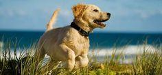 HUNDE RICHTIG ERZIEHEN: TOP 10 TIPPS  Such einen passenden Namen für den Hund.Es ist empfehlenswert ihm einen Name zu geben, der kurz ist und mit einem starken Konsonanten endet. Sprechen sie den Namen so klar, dass er den immer gut hören kann. Bei einer starken Endung, wie z.B. Casper, Duke, Ginger) stellt ihr Hund die Ohren auf, insbesondere wenn sie die Endung betonen. Wenn es ein größerer Hund ist, hat er sich wahrscheinlich schon an seine Name gewöhnt, aber den zu ändern ist kein…