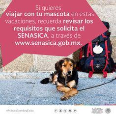 Si quieres viajar con tu mascota en estas vacaciones, recuerda revisar los requisitos que solicita el SENASICA, através de www.senasica-gob-mx
