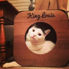 Awwwww!  that picture is gorgeous!  And we are so honoured that King Louie likes to sleep in his pod  #cat #catsofinstagram #cats_of_instagram #catfurnature #catfurniture #catsinboxes #cattoy #INSTACAT_MEOWS #cutecat #PurrMachine #catsinboxes #catbox #Excellent_Cats #BestMeow #dailykittymail #thecatniptimes #catcube #catpod #ArchNemesis #FlyingArchNemesis #myindoorpaws #ififitsisits #cutecatcrew #catchalet #catnip #themeowdaily #kitty #catpyramid #pyramid