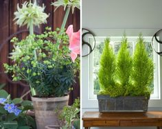 Container Plants Garden Design Calimesa, CA