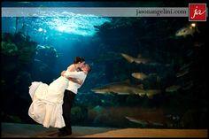 Florida Aquarium Wedding! Awesome picture!