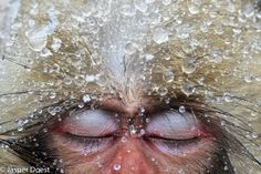 Joest has spent years photographing Japanese macaques.