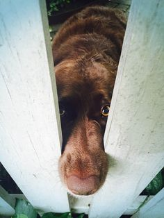 """""""Hey neighbor would you be so kind to pet me please?"""" #cute #dog #cat #pets"""