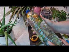 Sticluță magică,care ajuta la multe boli.Ca Diabeta.Combate prevenirea cancerului.Ajuta la Colon. - YouTube Youtube, Youtubers, Youtube Movies
