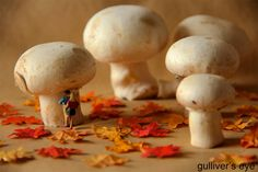Autumn lovers by gulliver_s_eye_and_miniWorldProject on 500px
