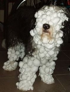 Looks like my dog after playing in the snow!