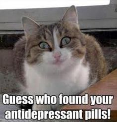 Guess who found your anti-depressant pills!!!!!!