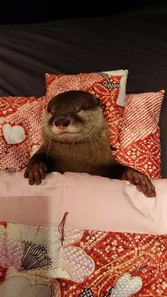 Otter sleeping in its comfy bed. in complete security. Cute Baby Animals, Animals And Pets, Funny Animals, Wild Animals, Sleeping Otters, Tierischer Humor, Baby Sea Otters, Otters Cute, Otter Love