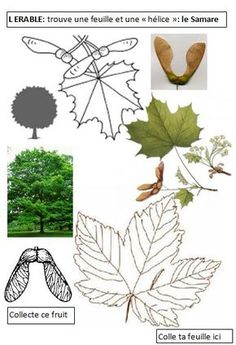 EEDD The forest cycle 2 cycle 3 Maths In Nature, Science And Nature, Cycle 3, Science Experience, Permaculture Design, Plant Science, Forest School, Camping Activities, Leaf Art