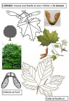 EEDD La forêt cycle 2 cycle 3 | BLOG GS CP CE1 CE2 de Monsieur Mathieu NDL