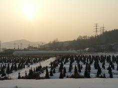 환한 햇님과 고요한 마을의 아침풍경